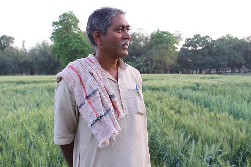 Farmer Raj Narayin Singh stands in his wheat field in Bihar, India. (Photo: Petr Kosina/CIMMY)