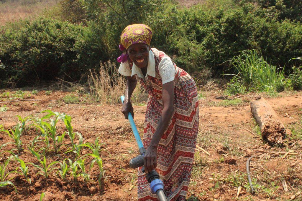 Irene Chikata, 69, operates her lightweight drip-kit on her plot in Nyanga, Zimbabwe. (Photo: Shiela Chikulo/CIMMYT)