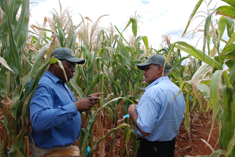 Stephen Mugo in discussion with a representative from Seed Co, Kenya. (Photo: Anne Wangalachi/CIMMYT)