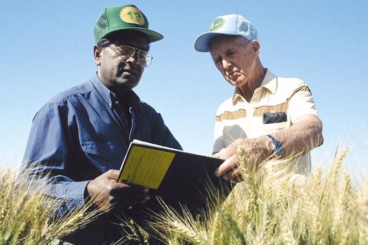 Norman Borlaug (derecha) en el campo con Sanjaya Rajaram, su sucesor como director del programa de trigo del CIMMYT. (Foto: Gene Hettel/CIMMYT)