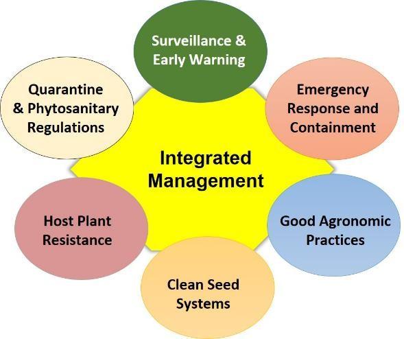 La prevención y control de enfermedades y plagas requiere una estrategia integral que movilice sinergias de múltiples instituciones. (Gráfico: B.M. Prasanna/CIMMYT)