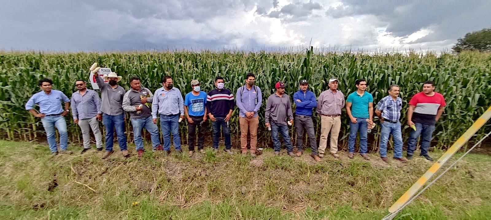 Reunión de planificación y día de campo con los agricultores que quieren participar en el proyecto Agriba Sustentable, en El Greco, Pénjamo, en Guanajuato, México. (Foto: CIMMYT)