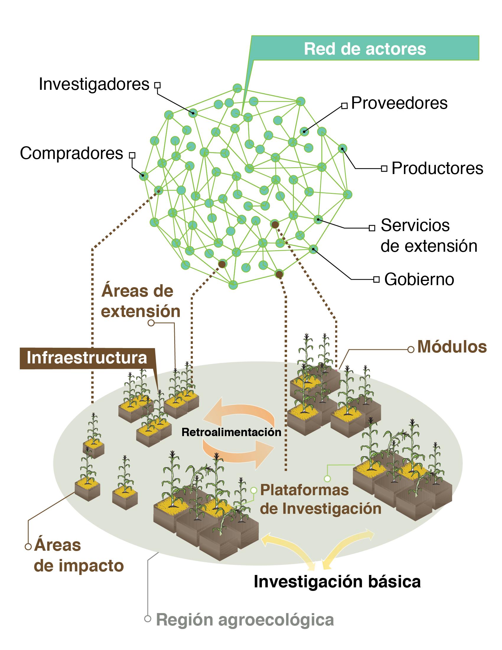 Ilustración esquemática de los hubs o redes de innovación del CIMMYT para los sistemas sostenibles de producción de maíz y trigo.