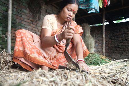 CIMMYT visit in Bangladesh