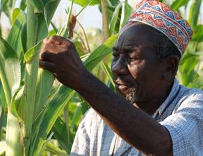 Drought_tolerant_maize_wins