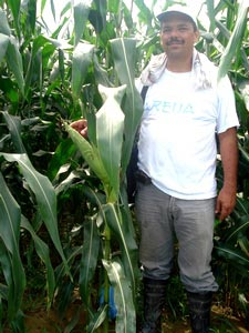 Carlos Peluha works for the Colombian Cereal Producers Federation (FENALCE) coordinating a project between CIMMYT and FENALCE, the Oil Palm Producers Federation (FEDEPALMA), and the Colombian Palm Oil Research Center (CENIPALMA). He appears here in a stand of maize at La Vizcaina, Colombia's chief research station for palm oil plants.