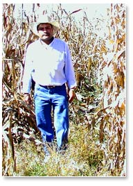 In the fields of Toluca Valley farmer, Julían Martínez, traditional plowing (left) coupled with local varieties has resulted in lodging—that is, many plants have fallen down. On the right, maize hybrids grown on raised soil beds stand tall.