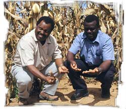 CIMMYT regional economist Mulugetta Mekuria (left) and SOFECSA coordinator Paul Mapfumo check the status of the soil on a smallholder farm in Zimbabwe.