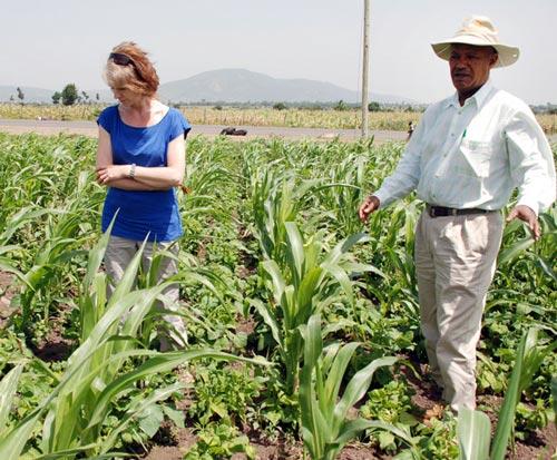 Diana+Tsedeke-examining-a-maize-field