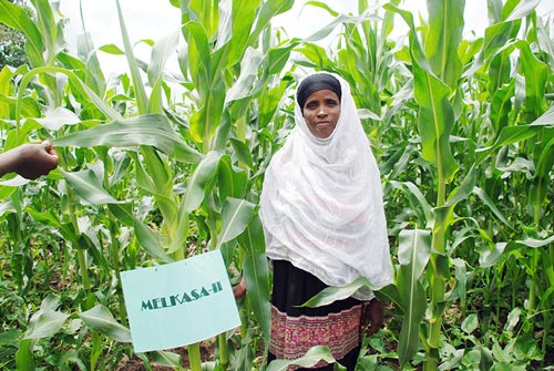 Fatuma Hirpo on her conservation agriculture demonstration plot where she has intercropped drought tolerant maize variety Melkassa II with beans.