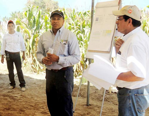 Félix San Vicente, Leader of the maize component of MasAgro.