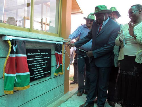 Felix Koskei, Kenya's Cabinet Secretary for Agriculture, unveils the plaque of the Doubled Haploid Facility in Kiboko, Makueni County. Looking on is Bodduppali Prasanna, director of CIMMYT's Global Maize Program (Left), Thomas Lumpkin, director general of CIMMYT and Ruth Kyatha from the Makueni County Cabinet Secretary for Agriculture. Photo: Wandera Ojanji