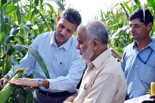 O.P. Yadav, director of the Directorate of Maize Research explains a promising hybrid to S. Ayyappan, director general of ICAR.