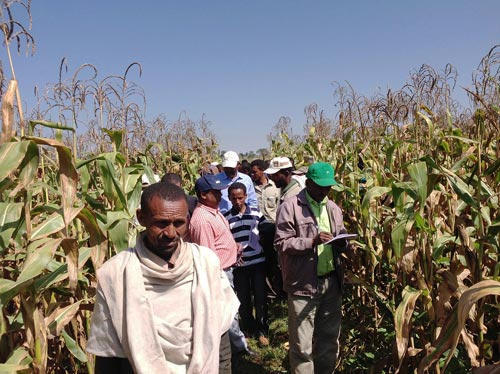 Participants visit and evaluate conservation agriculture demonstration plots at Ato Hunegnaw's farm in the Care-Gurach village of the South Achefer District, Ethiopia. Photo: Moti Jaleta