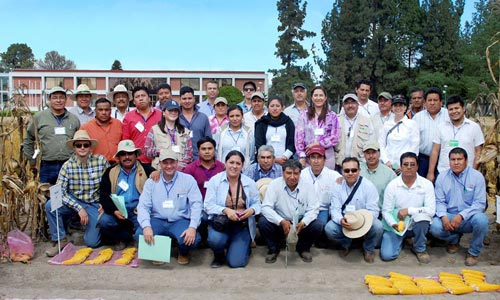 Improved-maize-varieties-demonstrated-in-Mexico
