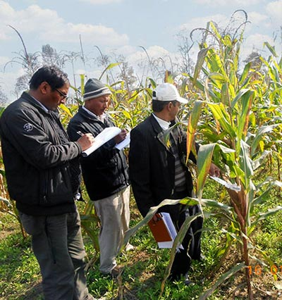 Participants record heat-stress phenotyping data in the field. Photo: Courtesy of NMRP
