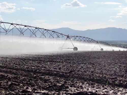 Pivot irrigation at a seed production farm in Angola. Both Kambondo and Matogrosso farms use pivot irrigation; this frees the farms from dependence on rain for seed production.