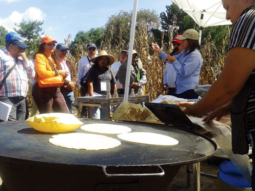 Natalia Palacios (green hat, right), maize nutrition quality specialist, explained the process for defining grain quality and outlined dough and tortilla industry requirements.
