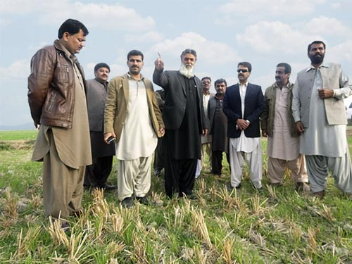 Participants in zero tillage wheat field. Photos: Naveed Ahmed Sheikh from Balochistan.