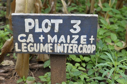 A sign indicates what conservation practices are being employed in a demonstration plot in Malawi. Photo : T. Samson/CIMMYT.