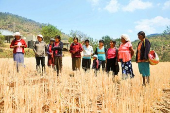 Women-farmers-MasAgro