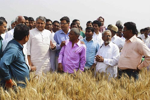 The Agriculture Minister of Bihar visiting a zero tillage wheat field in a climate-smart village ( Bhagwatpur) of Samstipur district. Photo: Deepak/CIMMYT