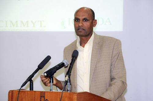 Bekele Abeyo points out that high-quality seed is critical in Ethiopia. Photo: CIMMYT