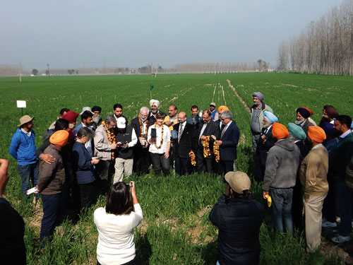 On-field App launch. Photo: CIMMYT-BISA