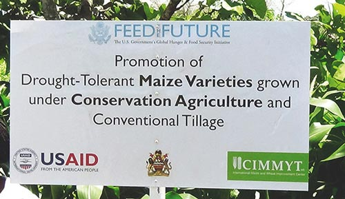 A poster depicting DT maize varieties.