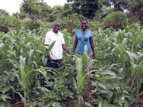Farmers admiring their maize-cowpea intercrop. Photo: Christian Thierfelder/CIMMYT