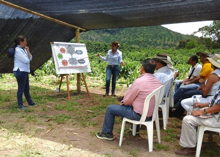 At Paraguaycito, CENICAFE agronomists Myriam Cañon and Angela Castaño explain the effects of climate on the coffee-maize system.