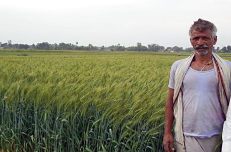 Biohappiness: A happy farmer grows ZincShakti wheat on his farm in Uttar Pradesh, India. Photos: Nirmal Seeds, India