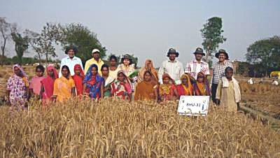 Women farmers in field.