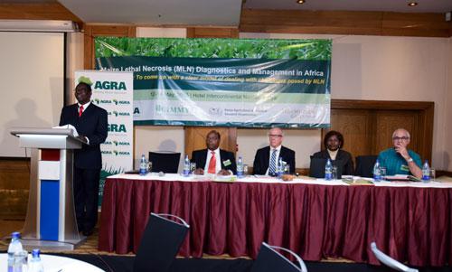 Officials at the opening of the MLN international conference in Nairobi. Left to right: George Bigirwa (AGRA), Stephen Mugo (CIMMYT), Joe DeVries (AGRA), Felister Makini (KALRO) and Gary Atlin (Bill & Melinda Gates Foundation). Photo: CIMMYT