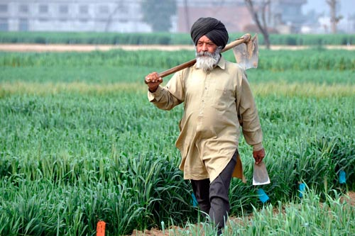 A climate-smart farmer in Ludhiana, Punjab, India. Photo: P. Casier/CGIAR