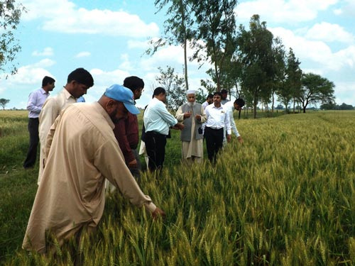Seed quality management training participants discuss the parameters of basic seed production with breeders and seed quality inspectors in Mureedke, Punjab, Pakistan. Photo: Tando Jam/ARI