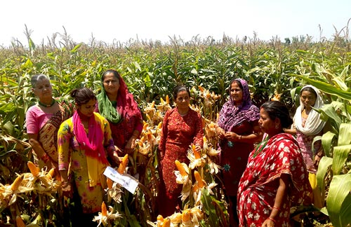Women farmers at a HTMA hybrid demonstration at Dumarawana village, Bara District, Nepal. Photo: NMRP, Rampur