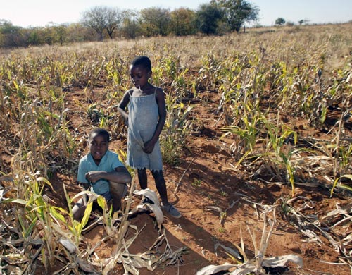 Children in a drought-stricken maize field in Gwanda District, southeast of Bulawayo, Zimbabwe's second largest city. Drought is the most frequently occurring natural hazard in Zimbabwe, made worse by the clear trend, since 1980,of decline in rainfall that the country has received each year. Photo: Desmond Kwande/Practical Action.