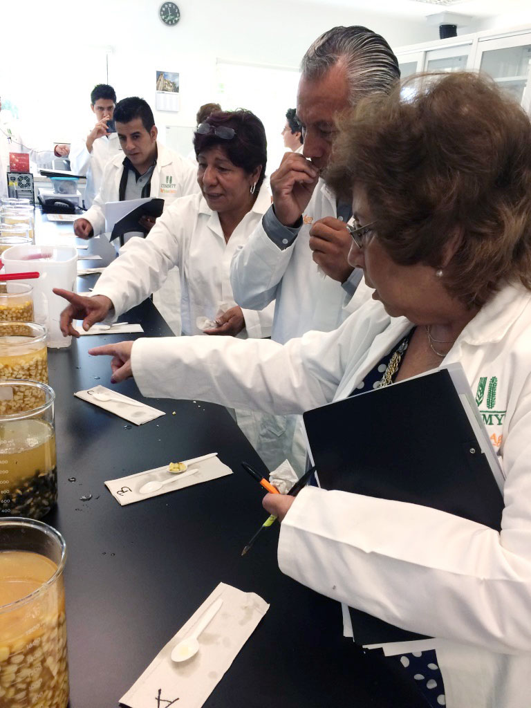 """Tortilla dough industry partners evaluating nixtamalized kernels during the workshop """"From empirical knowledge to technical tools."""" Photo: Natalia Palacios/CIMMYT."""