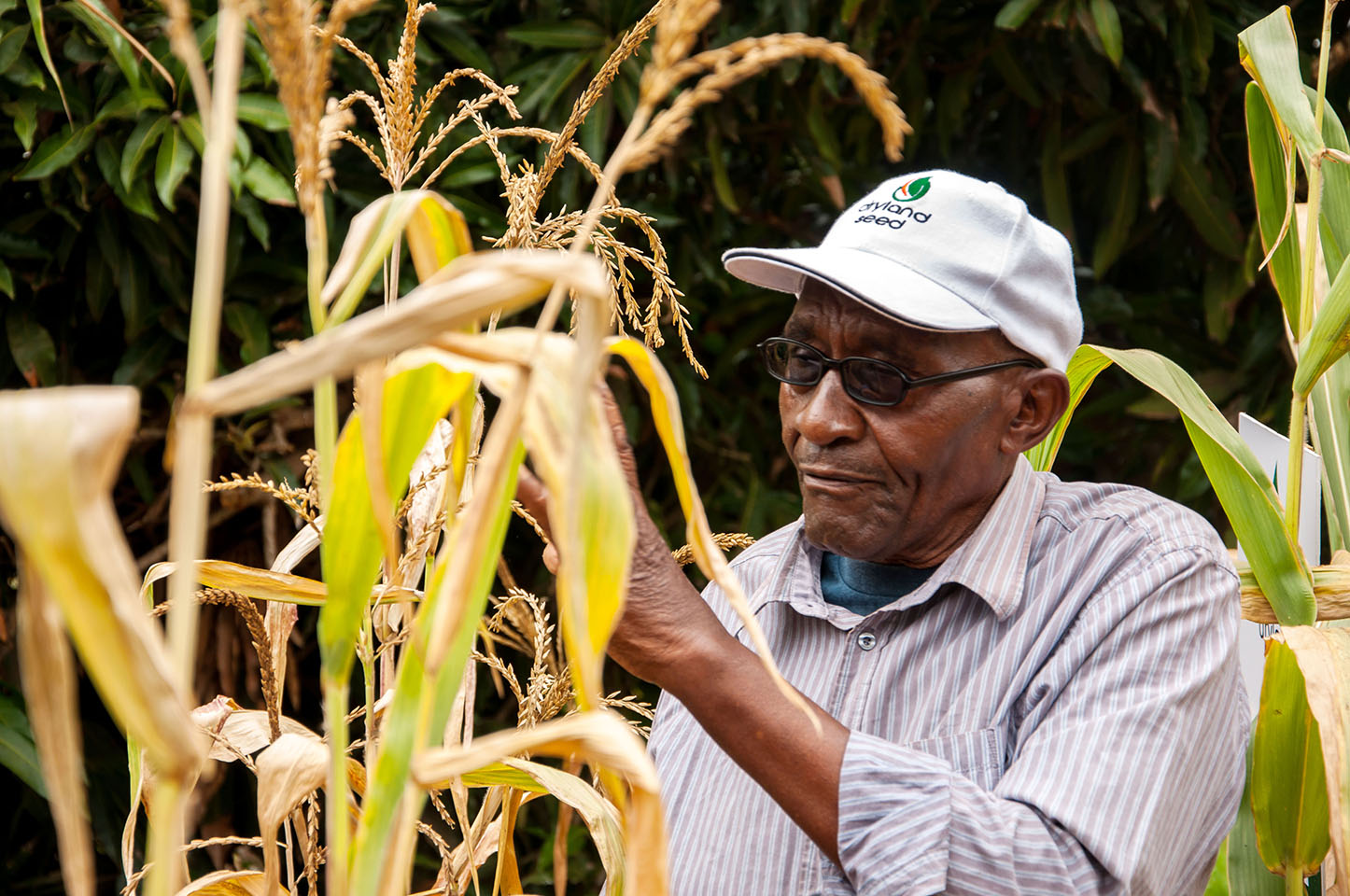Joseph Mulei on his farm in Machakos County, Kenya, where he planted several drought tolerant hybrid maize varieties including Drought Tego and Sawa (DSL H103). Photo: Brenda Wawa/CIMMYT.