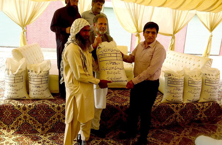 Distributing wheat seed in Faisalabad. Photo: Monsif ur Rehman/CIMMYT Pakistan
