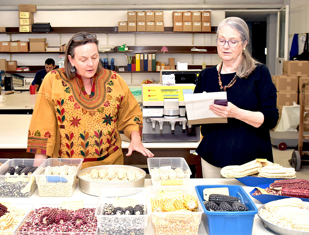 Martha Willcox (left) points out specific maize varieties being stored in the germplasm bank as author Rachel Laudan looks on. (Photo: CIMMYT)