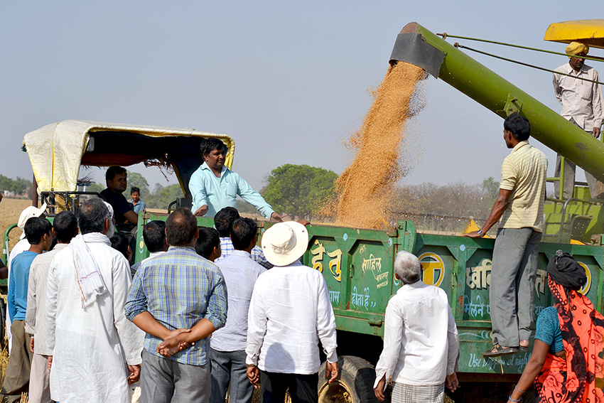 In eastern India, CSISA increased adoption of early sowing of wheat and zero tillage by demonstrating the benefits in farmers' fields. Photo: Vinaynath Reddy.