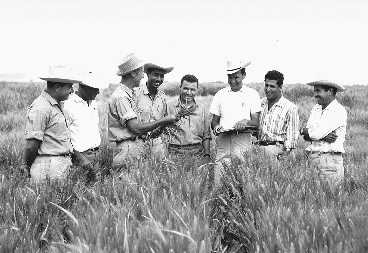 Borlaug Training Field 1960s