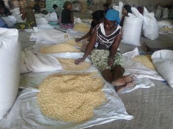 productoresafricanos