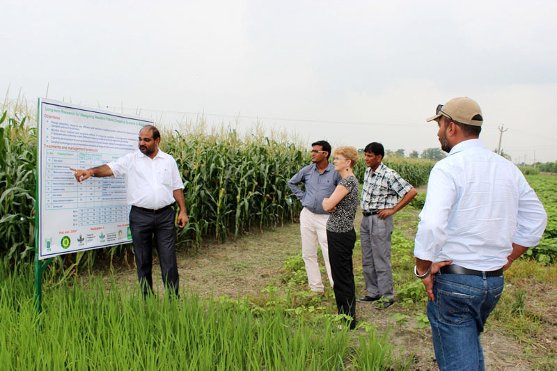 M.L. Jat shows resilient cropping system options for eastern Indo-Gangetic plains at BISA farm