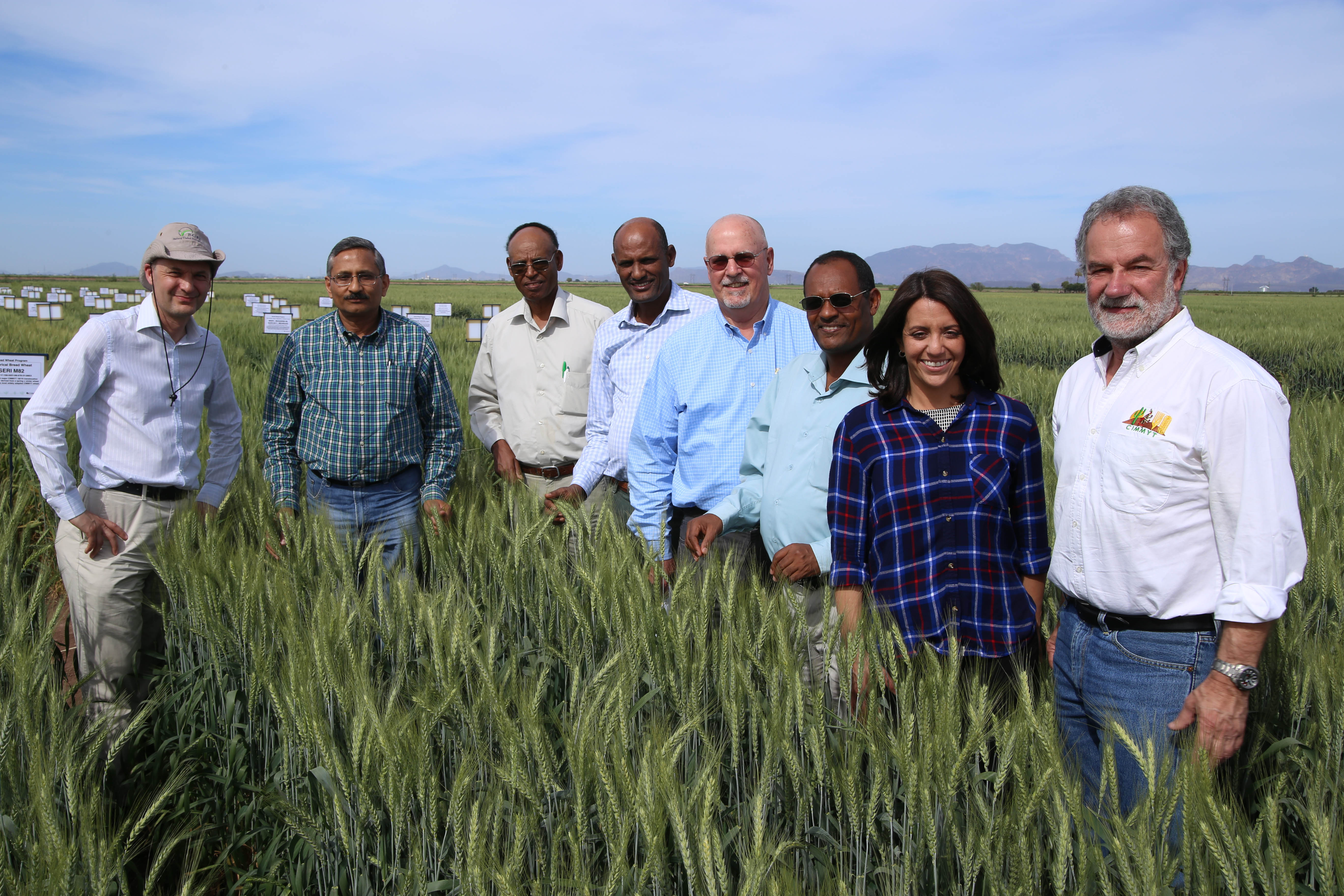 DGGW team: The new Cornell project — Delivering Genetic Gain in Wheat (DGGW) — is a partnership that includes (among others) (l-r) Dave Hodson and Ravi Singh of CIMMYT, Bedada Girma of the Ethiopian Institute for Agricultural Research (EIAR), Bekele Abeyo of CIMMYT, Ronnie Coffman of Cornell, Fentahun Mengistu of EIAR, Maricelis Acevedo, new director for science of the DGGW at Cornell, and Hans Braun, of CIMMYT. CORNELL/C.Knight