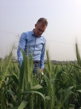 Kropff examines zero tillage wheat in Bihar. Photo: Nynke Kropff-Nammensma/CIMMYT