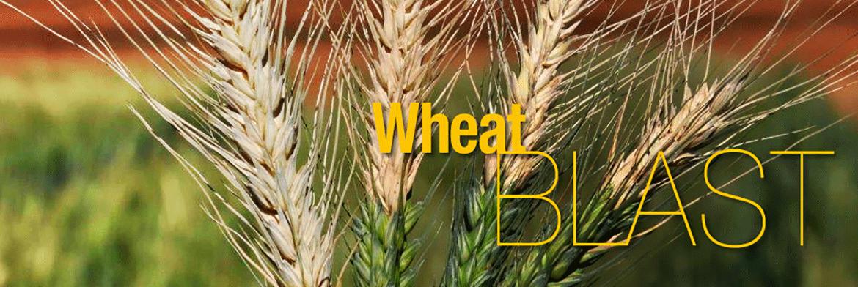 wheat_blast_masthead