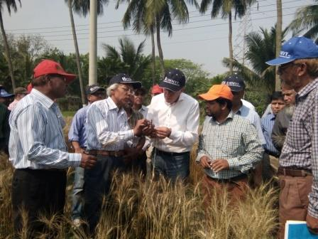 PK Malaker, BARI senior wheat pathologist (2nd from the left) and other BARI scientists showing blast affected wheat to Kropff in Jessore district. Malaker is the scientist who first identified the emergence of wheat blast in Bangladesh. Photo: CIMMYT-Bangladesh